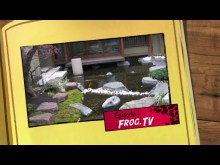 FROGZ TV - Episode 1: Project Natal et Microsoft Kin Live