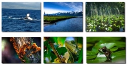 Bing's Earth Day Contest Finalists